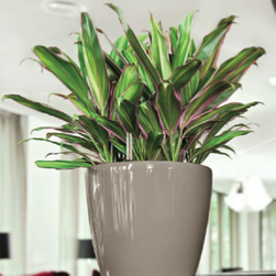 office-plants-tricolor